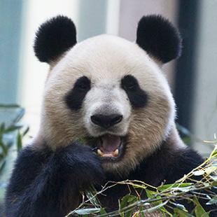 毎日パンダ   上野動物園に毎日通い続ける人によるパンダブログ