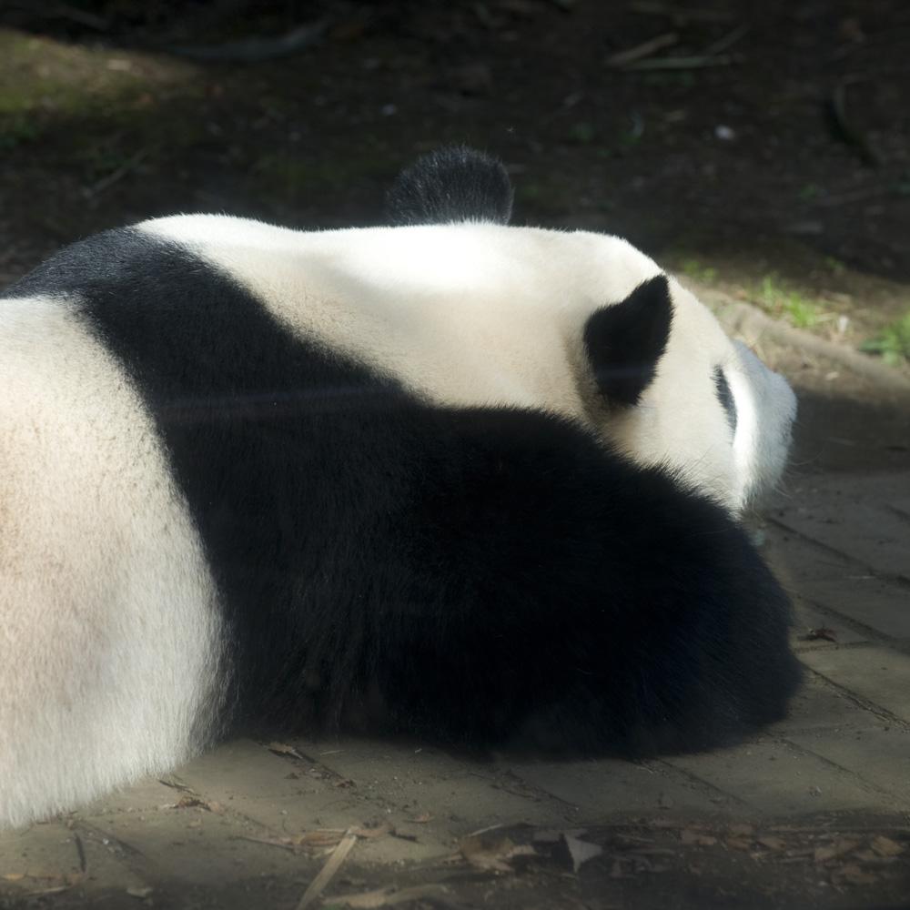 ぬいぐるみパンダ
