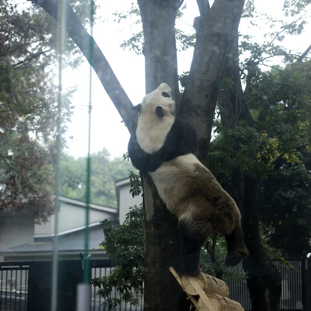 リーリー木登り