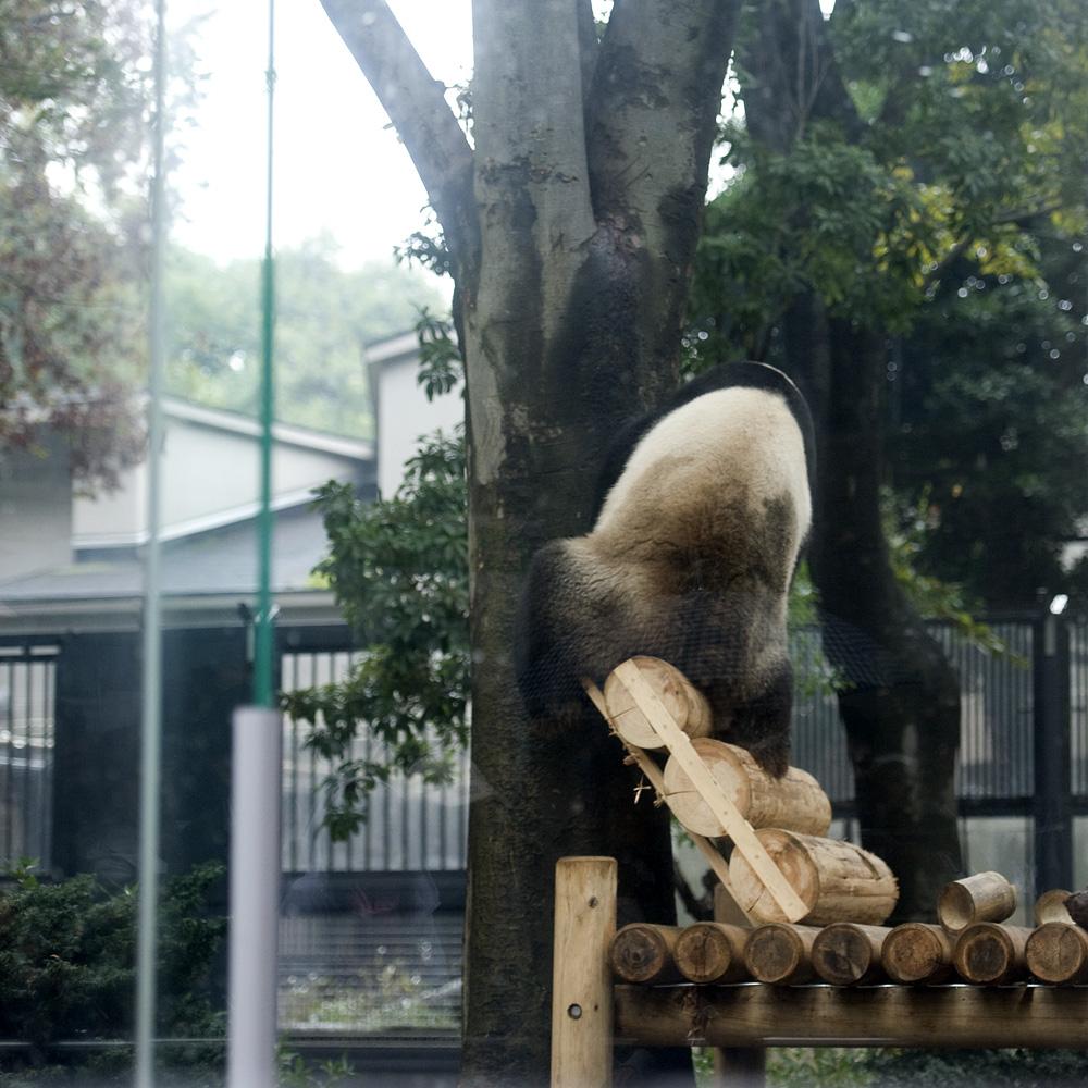 リーリーは木登り断念