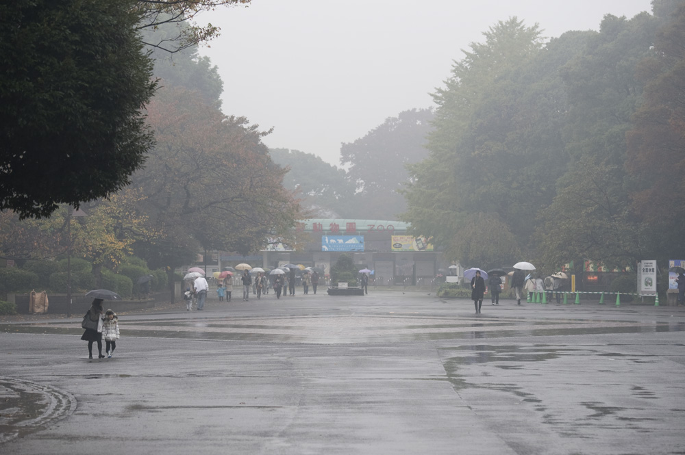雨の上野動物園