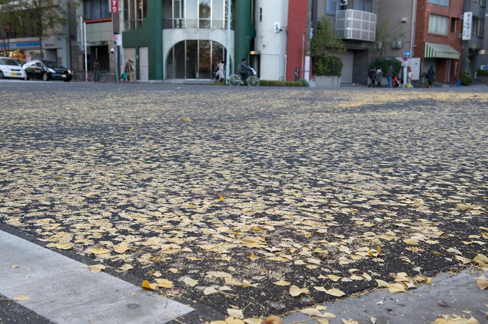 道に落ち葉