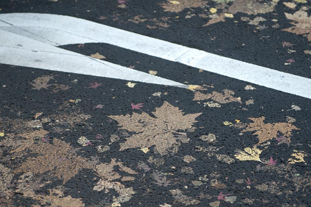 道路の押し花