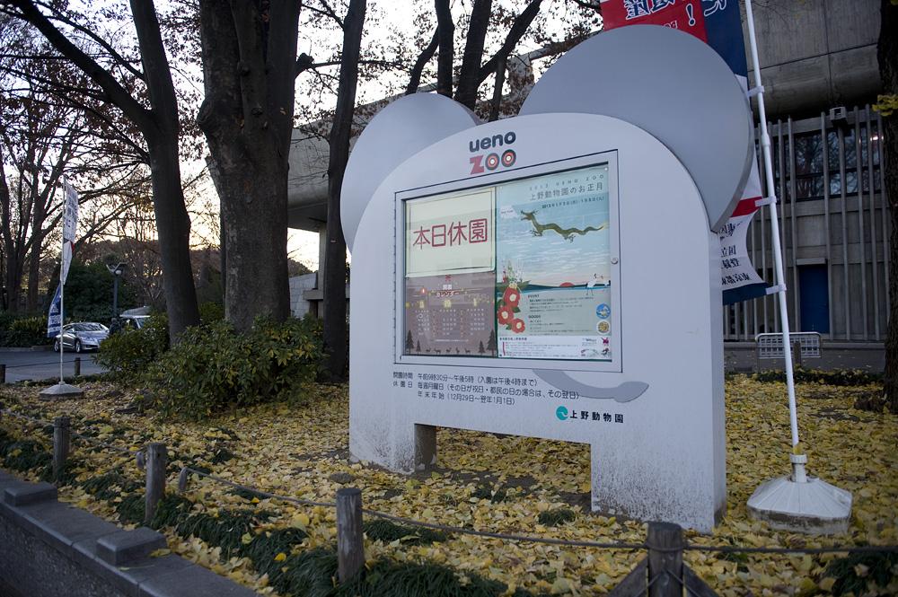 上野動物園 休園日 落ち葉