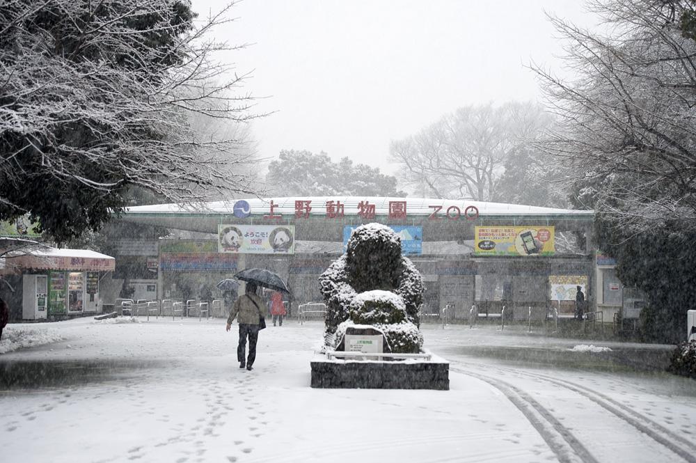 雪の上野動物園