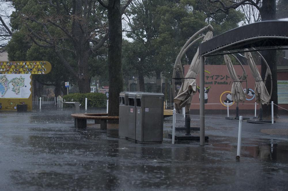 暴風の上野動物園