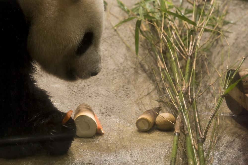 パンダのごはん
