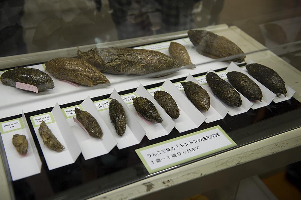 トントンのウンチの標本