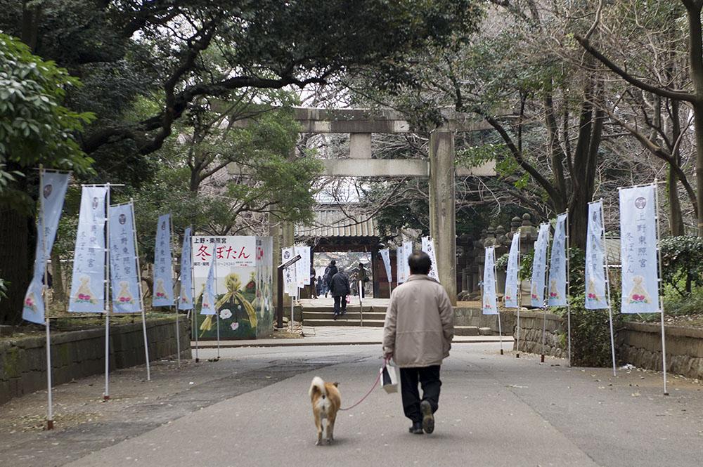 上野東照宮 冬ぼたん