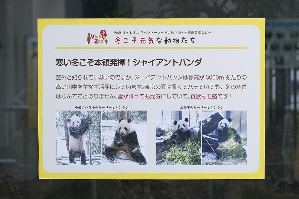 寒い冬こそ本領発揮!ジャイアントパンダ