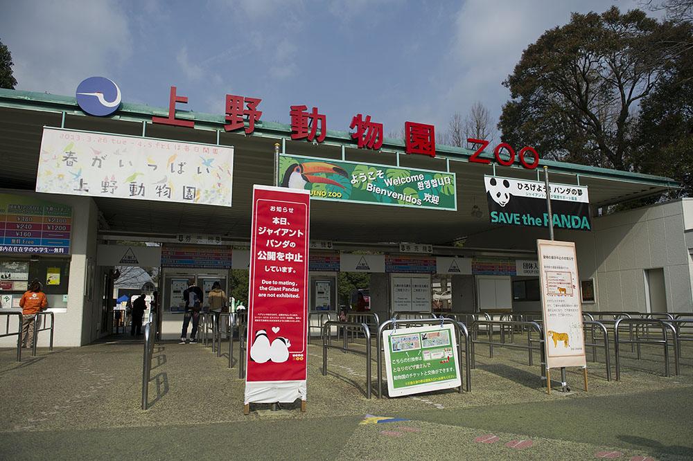 上野動物園 ジャイアントパンダ非公開