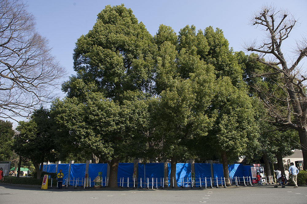 上野動物園 ジャイアントパンダ 非公開