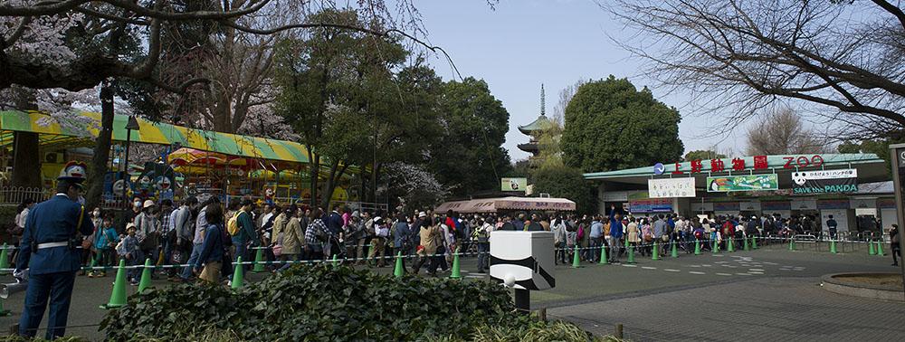 上野動物園 パンダを見る方の列