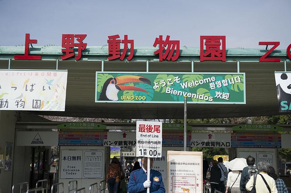上野動物園 1時間待ち
