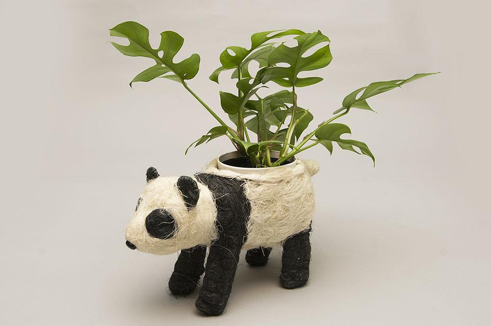 パンダの鉢植え