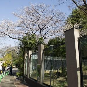 130321-DSC_7933-gallery-ri